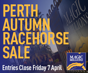 MAG993_Perth Autumn Racehorse Sale Web Banners_300x250